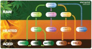 cannabinoide_understandingcannabis